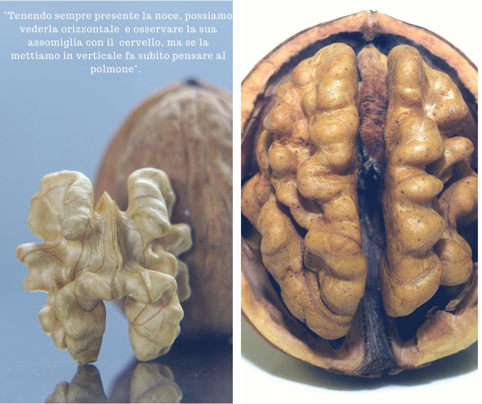 semi oleaginosi, le noci significato