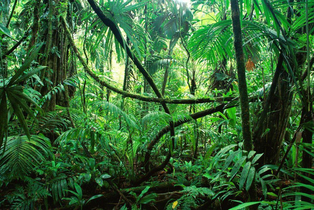 scoperta archeologica, giungla, piante mediche