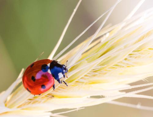 Diretta Facebook: Giornata mondiale delle api